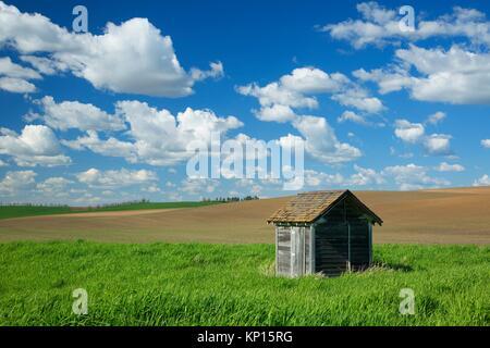 Palouse shed, Whitman County, Washington. - Stock Photo