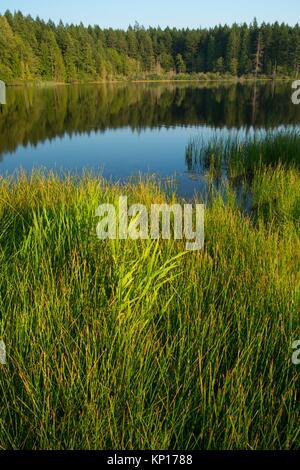 Anderson Lake, Anderson Lake State Park, Washington. - Stock Photo