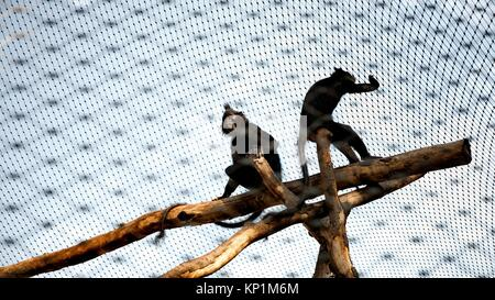 Two monkeys sitting on the tree trunk in the zoo - Stock Photo