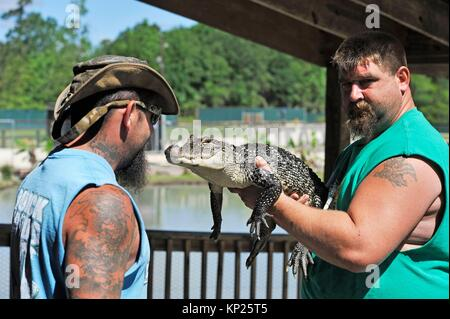 two men of Gator Country Wildlife Adventure Park showing a juvenile alligator, Beaumont, Texas, United States of - Stock Photo