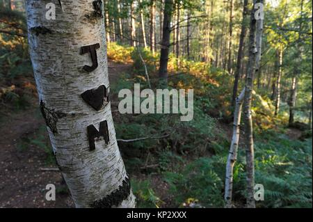 initials and heart carved on a trunk of birch, Rochers d´Angennes site in the Forest of Rambouillet, Haute Vallee - Stock Photo