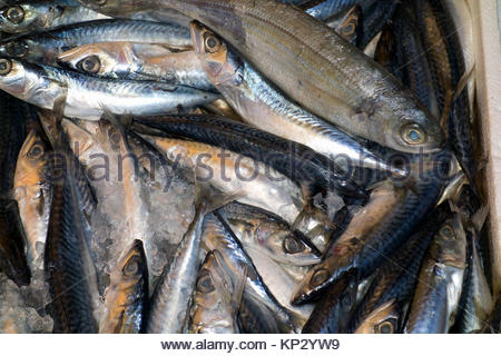 Fish at fish market rhodes island greece europe stock for Outdoor fish for sale