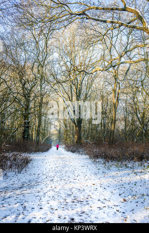 Corby, UK. 12th Dec, 2017. Man walks along a snow covered path through the Kingswood at Corby, England, on a cold, - Stock Photo