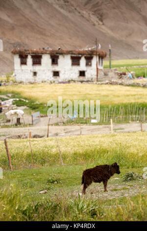 Miru, Manali - Leh Highway, Ladakh, India. - Stock Photo