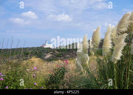 Pampas grass (Cortaderia selloana) and lighthouse, Capo Ferro, Costa Smeralda, Sardinia, Italy, Mediterranean sea, - Stock Photo