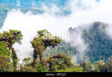From Andes to Amazon, View of the tropical rainforest, Ecuador - Stock Photo