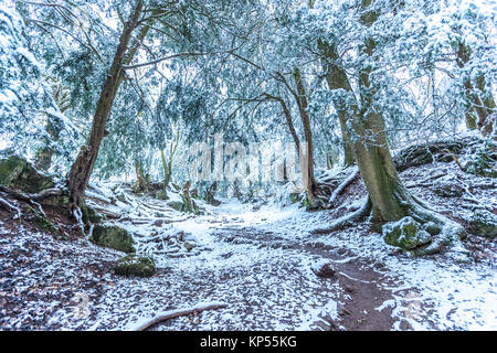 11th December 2017, 4pm: Winter snows cover the ground at Puzzlewood in the Forest .Even on a movie set, the animals - Stock Photo