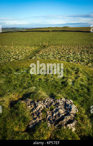 Gib Hill Neolithic and early Bronze Age mounds near Arbor Low, Derbyshire, UK - Stock Photo