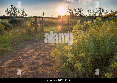 Sandy pathway with footprints and green plants, at sunset, with beautiful golden light. Porto Caleri botanical Park, - Stock Photo