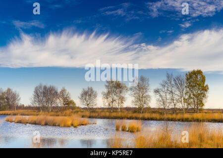 Moorlandschaft, bog, wetland, Das Goldenstedter Moor bei Barnstorf im Landkreis Vechta, Niedersachsen, Deutschland - Stock Photo