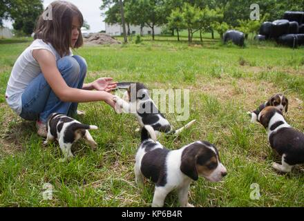 Caucasian 7 years old girl is sitting and playing with four puppies while choosing the one she will bring home. - Stock Photo
