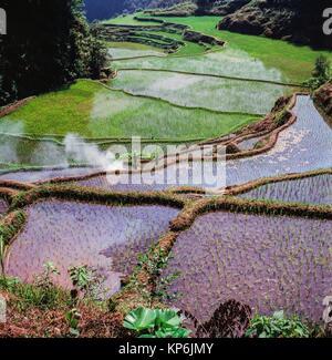Banaue Rice Terraces, Ifugao Province, northern Luzon, Philippines. - Stock Photo