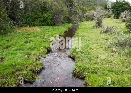 Stream and flora, Tierra del Fuego National Park, Ushuaia, Argentina. - Stock Photo