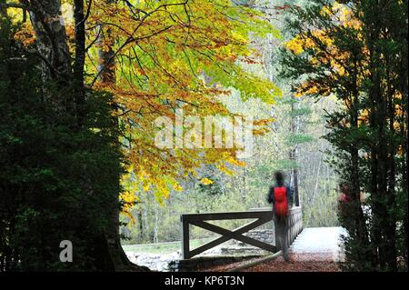 The forest in autumn. Valley of Ordesa. The Monte Perdido and Ordesa National Park. Huesca province, Spain - Stock Photo