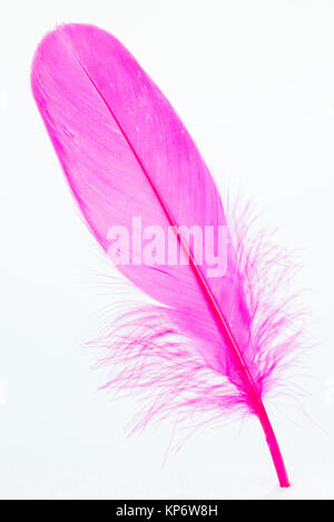 Pink feather - Stock Photo