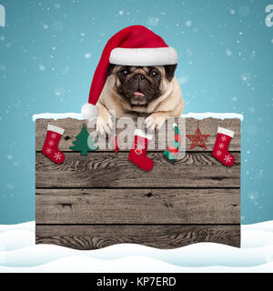 cute pug puppy dog wearing santa hat hanging with paws on weathered wooden sign with Christmas decoration, on blue - Stock Photo