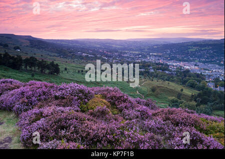 Under deep pink sunset sky, view across Ilkley Moor over town nestling in valley, purple heather in foreground  - Stock Photo