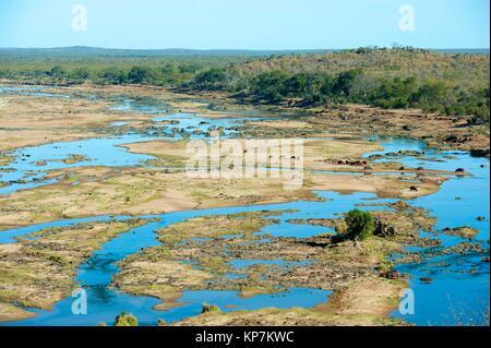 A pod of Hippopotami (Hippopotamus amphibius) resting on sandbank by river, Kruger National Park, Transvaal, South - Stock Photo