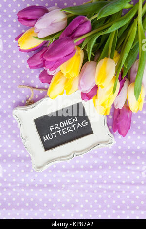 colorful tulips on purple - Stock Photo