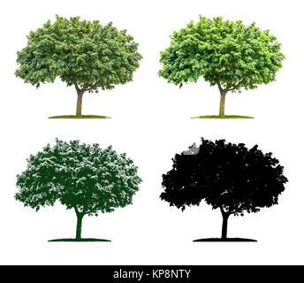 Baum in vier unterschiedlichen Illustrationstechniken - Ahorn - Stock Photo