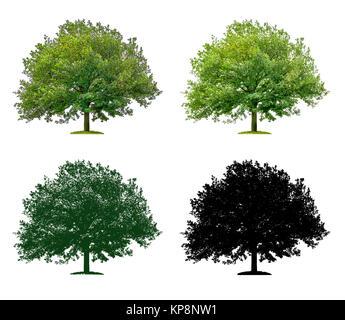Baum in vier unterschiedlichen Illustrationstechniken - Eiche - Stock Photo