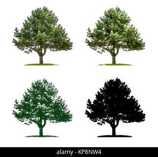 Baum in vier unterschiedlichen Illustrationstechniken - Kiefer - Stock Photo
