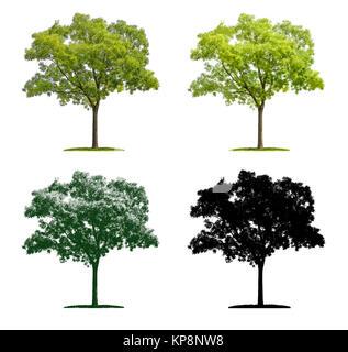 Baum in vier unterschiedlichen Illustrationstechniken - Schnurbaum - Stock Photo