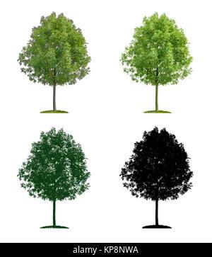 Laubbaum in vier unterschiedlichen Illustrationstechniken - Stock Photo