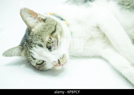 Cute cat portrait wearing a securitiy collar in relaxing time - Stock Photo