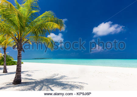 Two palm trees overlooking blue lagoon and white beach - Stock Photo