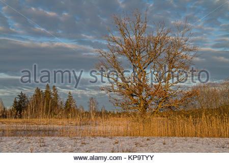 Gaißacher Filze im Winter - eine idyllische Moorlandschaft im Voralpenland bei Bad Tölz - Stock Photo