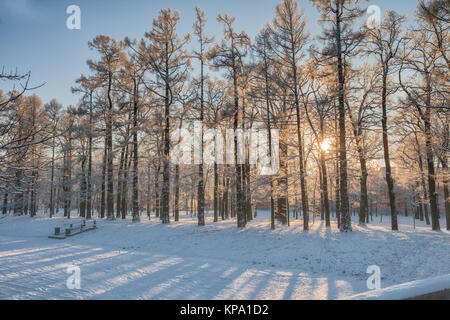 Low winter sun shines through snow-covered trees in the park, St. Petersburg, Russia - Stock Photo