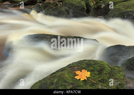 The Strid, a very narrow section of the river Wharfe near to Bolton Abbey in the Yorkshire Dales National Park, - Stock Photo