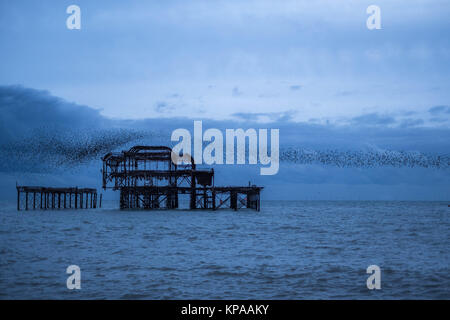 Large flock of starlings congregating at West Pier, Brighton UK. - Stock Photo
