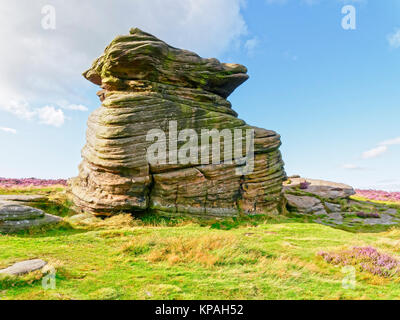 The Mother Cap gritstone rock formation stands on Hathersage Moor amidst green ferns and grass and the purple Bell - Stock Photo