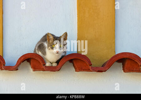 A bi-colored tabby white cat resting on decorative red roofing tiles watching curiously, Rhodes, Greece. - Stock Photo
