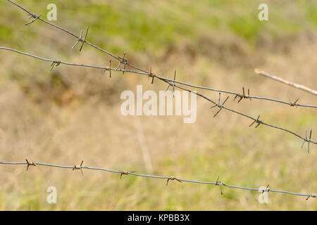 Fragments of barbed wire against the background of green grass. Volgograd, the Volgograd region Russia April 29, - Stock Photo