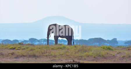 Kenya is a prime tourist destination in East Africa. Famous for wildlife and natural beauty. Elephant bull and blue - Stock Photo