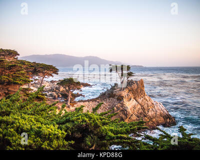 Sunset in the Lone Cypress - Stock Photo