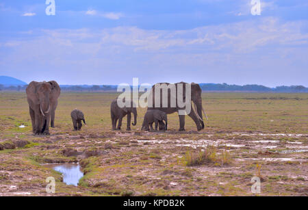 Kenya is a prime tourist destination in East Africa. Famous for wildlife and natural beauty. - Stock Photo