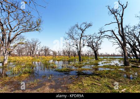 Moremi game reserve landscape - Stock Photo