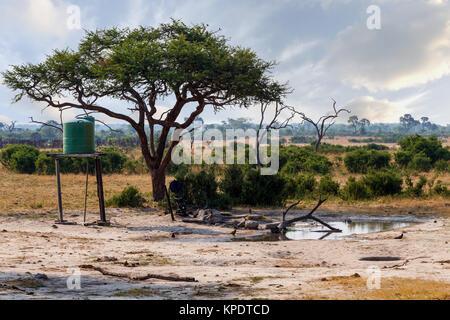 Large Acacia tree in artificial waterhole - Stock Photo