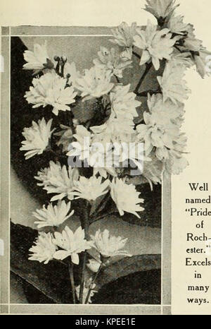 'Revised, illustrated and descriptive catalogue of fruit and ornamental trees shrubs, roses, bulbs and bulbous plants, - Stock Photo