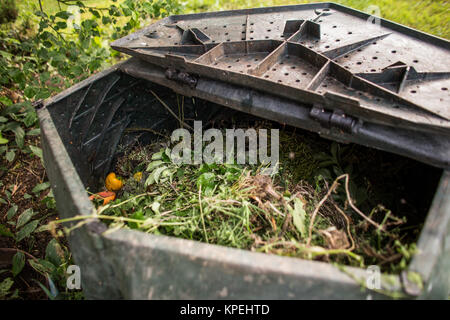 Plastic composter in a garden - filled with decaying organic material to be used as a fertilizer for growing home - Stock Photo
