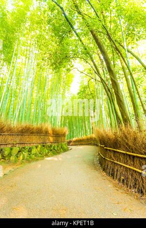 Arashiyama Bamboo Forest Twisting Road Nobody V - Stock Photo