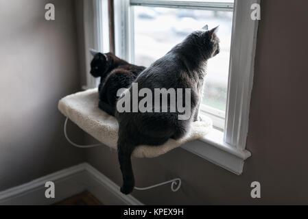 White and Black Cat Sitting on Window Ledge - Stock Photo