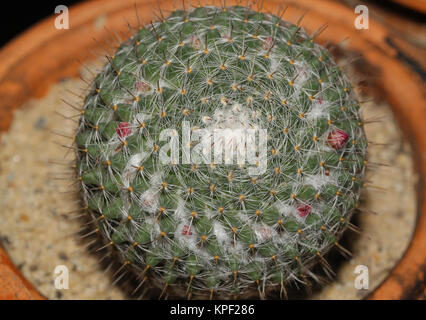 Close up of cactus - Stock Photo