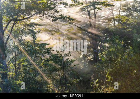 Forest scene at patagonia queulat national park, Aysen, Chile - Stock Photo