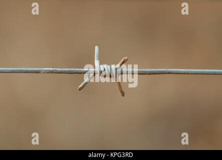 Single strand of Barbed wire fencing, close-up, at Marloth Park - Stock Photo