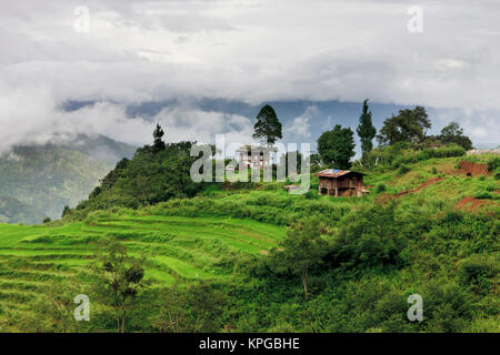 Asia, Bhutan. Rice fields and terraces spread out in all areas between the mountains. - Stock Photo